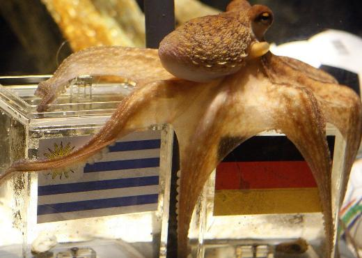Paul-the-Octopus-4